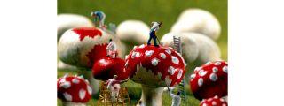 """Minimiam"", un delicioso mundo en miniatura"