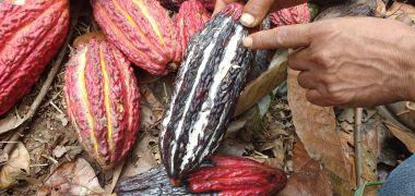 AGROIDEAS rinde homenaje a mujeres productoras de cacao que lideran empresa de chocolatería en la región San Martín